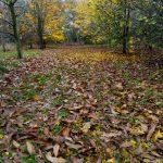 Gite de Kergoniou-Fête des feuilles