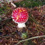 Gite de Kergoniou-Surprise d'automne