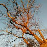 Gite de Kergoniou-Branches d'hiver