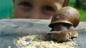 Chapeau l'escargot