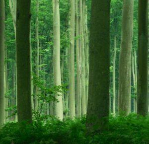 Forêt de Lyons
